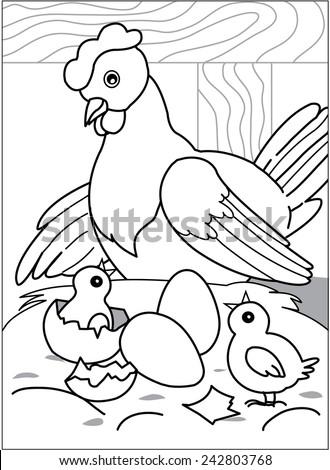 Hen In The Barn Looks Like Chicks Hatch Near Two Eggs
