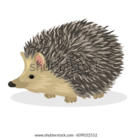 Hedgehog Stock Images Royalty Free Images Amp Vectors