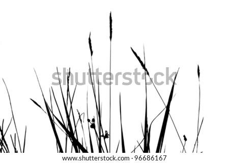 herb silhouette on white background, vector illustration - stock vector