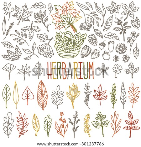 Herbarium. Different types and shapes of autumn leafs and herbs. Vector freehand drawings set isolated on white background. - stock vector