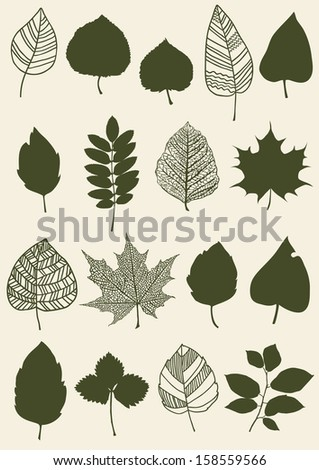 Herbarium of the different green leaves - stock vector