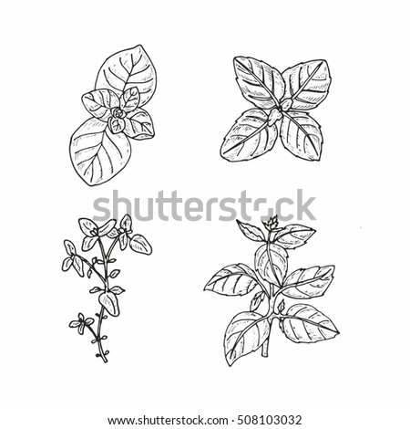 herbs coloring pages - photo#36