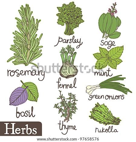 Herbs set - stock vector