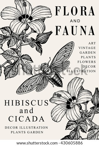 Hibiscus, Cicada, mallow. Beautiful garden baroque blooming realistic flowers. Frame, greeting invitation card, label. Drawing engraving. Freehand. Flora, fauna. Vintage vector victorian illustration. - stock vector