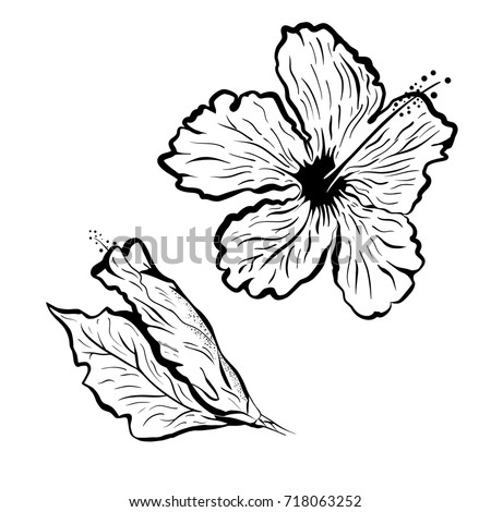Hibiscus Tattoos Stock Images, Royalty-Free Images ...
