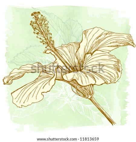 Hibiscus flower vector hand draw
