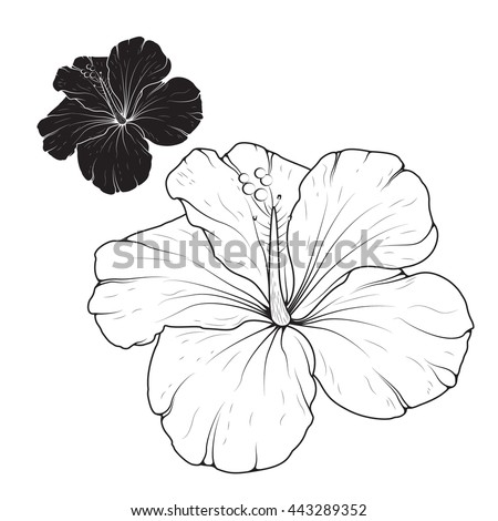 Hibiscus Icon Isolated On White Background Stock Vector ...