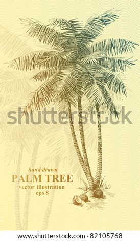 Highly detailed hand drawn palm tree. - stock vector
