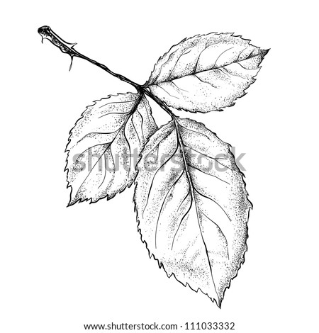 highly detailed hand drawn rose's leaves. - stock vector
