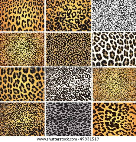 Highly detailed leopard vector pack - 12 different pattern - stock vector
