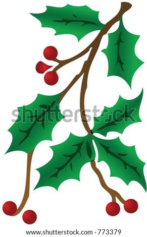 Holly Branch - stock vector