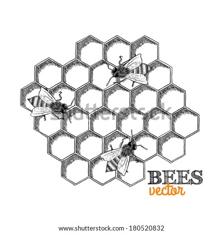 Honey bees and honeycomb isolated vector illustration - stock vector