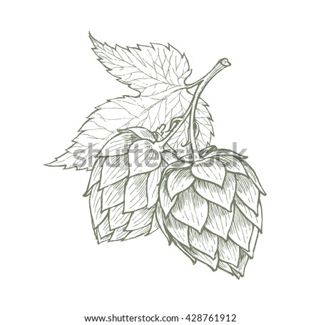 hops beer vector illustration - stock vector