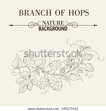 Hops with leafs isolated on sepia. Vector illustration. - stock vector