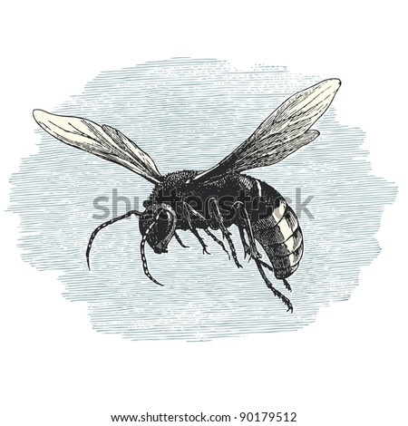 "Hornet - vintage engraved illustration - ""Cent récits d'histoire naturelle"" by C.Delon published in 1889 France - stock vector"