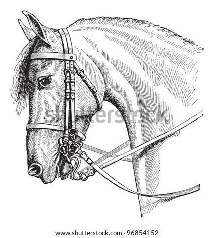 Horse head / vintage illustration from Meyers Konversations-Lexikon 1897 - stock vector
