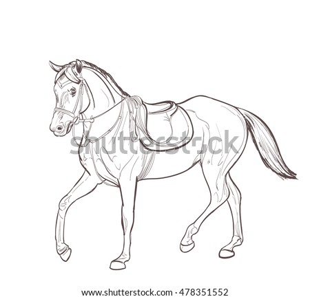 horse line art drawing. vector