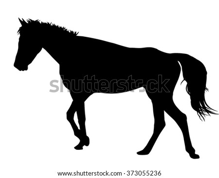 Horse silhouette on white background, vector illustration - stock vector