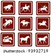 horse sport icons. Web Buttons - stock vector