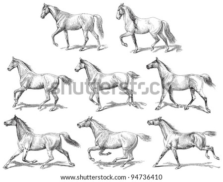 Horses collection / vintage illustration from Meyers Konversations-Lexikon 1897 - stock vector
