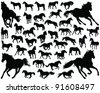 horses silhouette-vector - stock vector