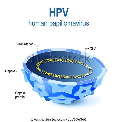 Hpv Stock Images, Royalty-Free Images & Vectors | Shutterstock
