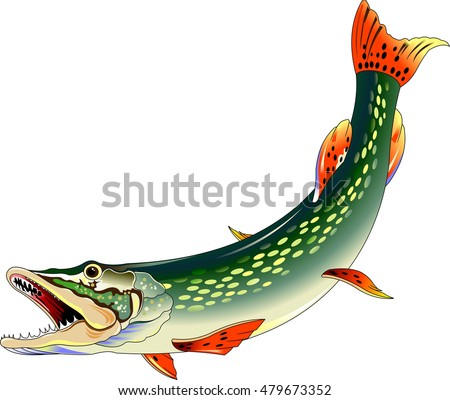 huge toothy pike attacks, illustration on a white background, vector