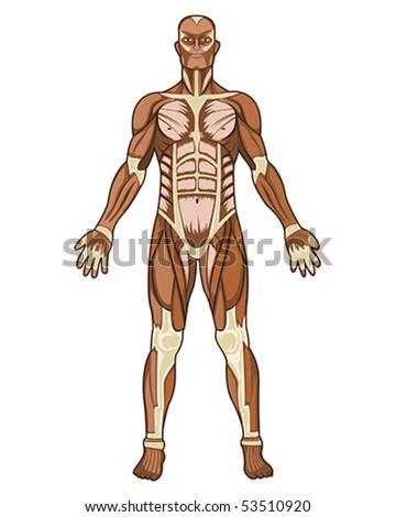 Human anatomy medical concept illustration in vector - stock vector