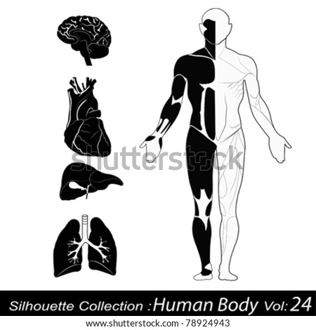 Human body - stock vector
