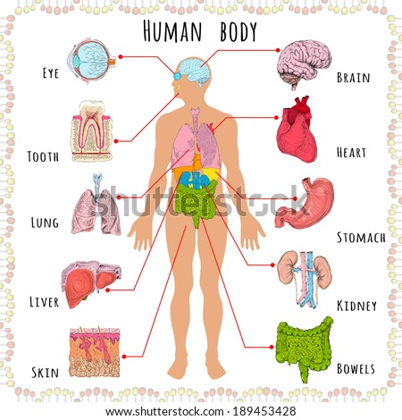 Human Body Medical Infographics Person Silhouette Stock Vector ...