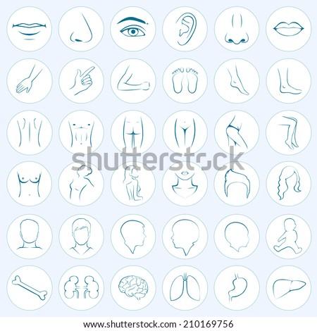 human body parts, five senses, organs, medical vector icons - stock vector