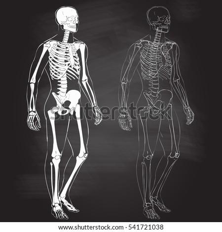 Human Body Parts Skeletal Man Anatomy Stock Vector 541721038 ...
