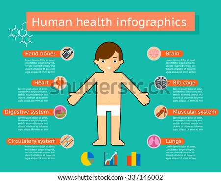 Human body systems medical infographics. Physiology and digestive, muscle and medicine, circulation and lung, rib cage and brain, vector illustration - stock vector