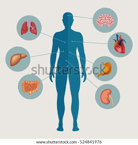 Human body with internal organs. Medical infographics elements. Vector illustration.