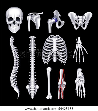 Human bones, on black - stock vector