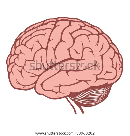 human brain - stock vector