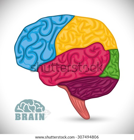 Human brain design, vector illustration eps 10.