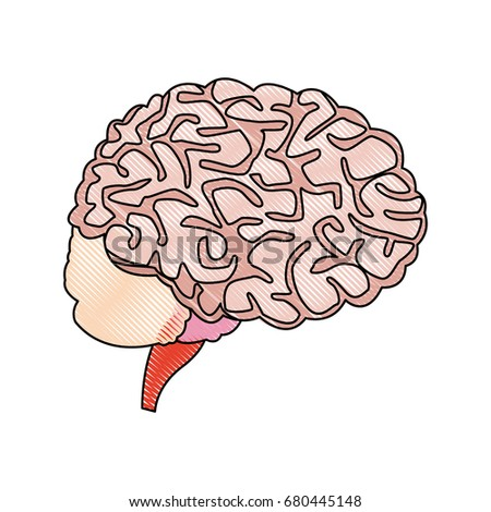 Human brain medical healthy memory anatomy stock vector 680445148 human brain for medical healthy memory anatomy design ccuart Images