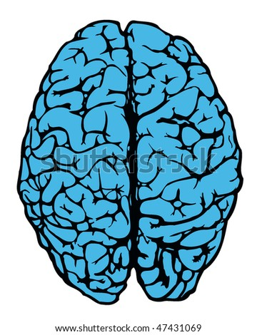 human brain from above in blue color - stock vector