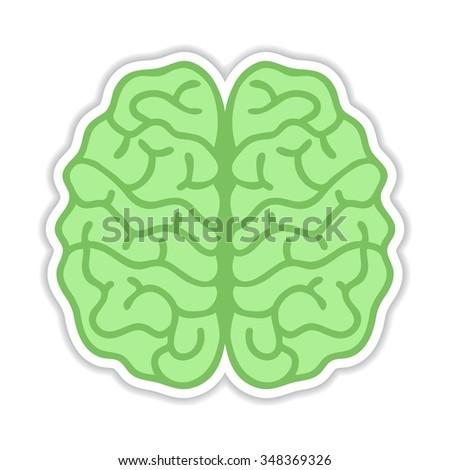 Human brain hemispheres Sticker - Vector illustration, realistic design element - stock vector