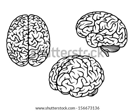 Human brain in three planes for medical, genetics and healthcare design or idea of logo - stock vector