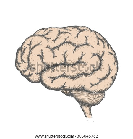 Human brain. Isolated on white background. Doodle image. Stock Vector.
