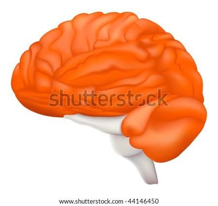 Human Brain, mesh - stock vector