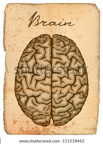 Human brain, old manuscript with illustration. EPS 10, CMYK - stock vector