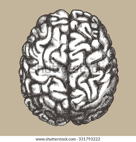 Human brain. Vector hand drawn illustration. - stock vector