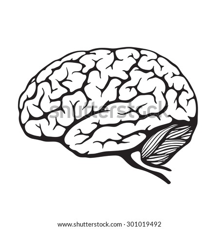 Human brain. Vector illustration - stock vector