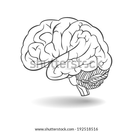 Human brain with shadow. A side view. Vector  - stock vector