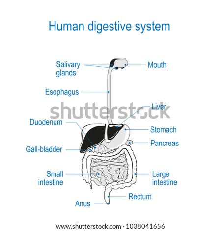 human digestion sci 241 Kids learn more about the science of the human digestive system how we turn  food into energy for our bodies.