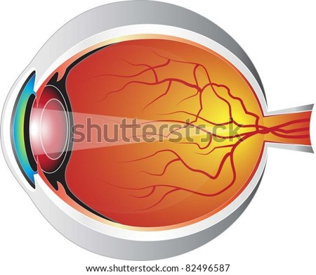 human eye - stock vector