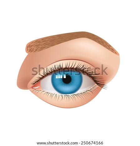 Human eye isolated on white photo-realistic vector illustration - stock vector